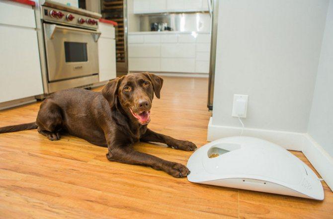 Почему собаки слипаются при спаривании схема
