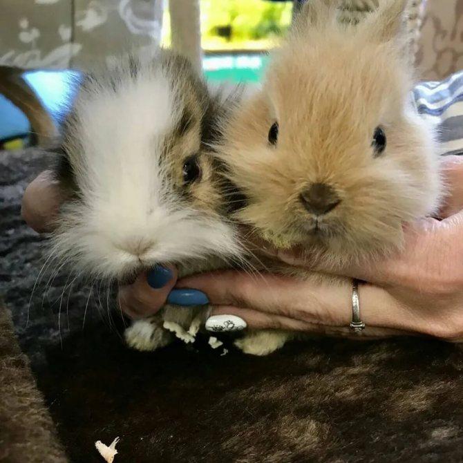 Сколько стоит мясо кролика?