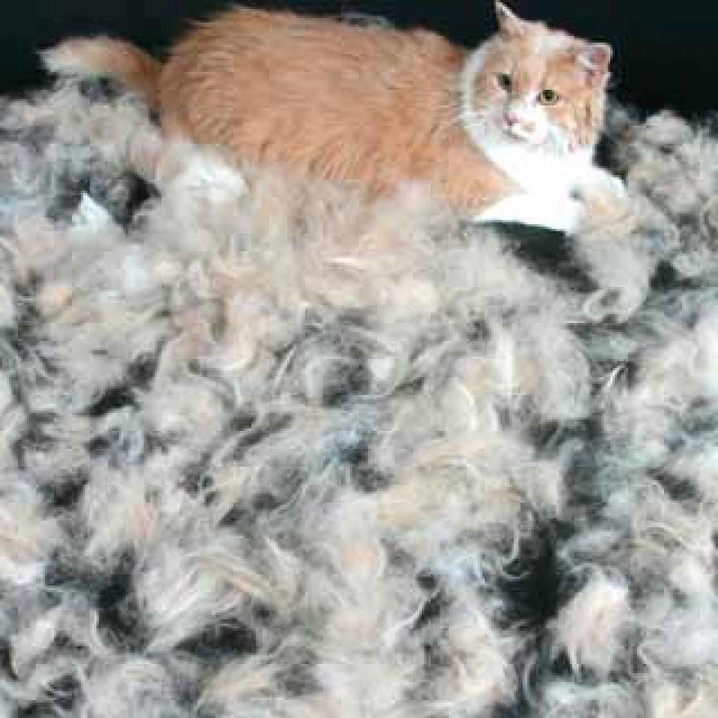 Кошка похудела. что делать?   нвп «астрафарм»