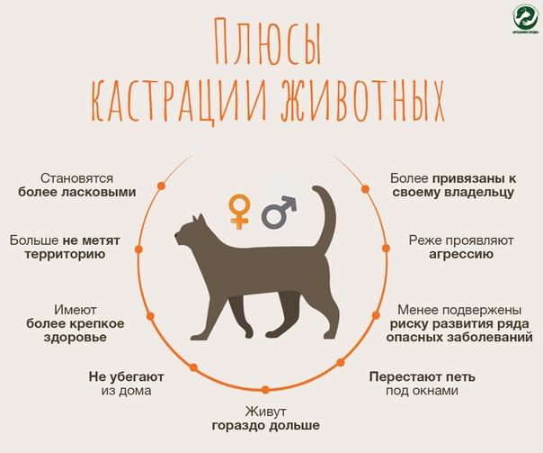 Кастрированный кот метит — основные причины и как отучить