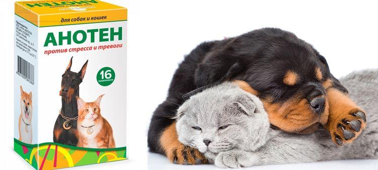 Анотен – успокаивающий препарат для кошек и собак