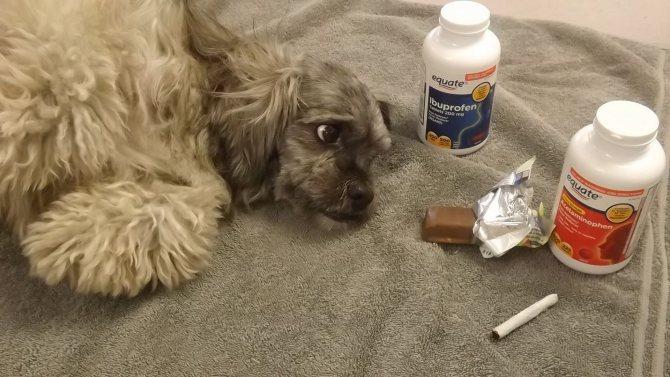 Экстренная помощь животному при отравлении крысиным ядом