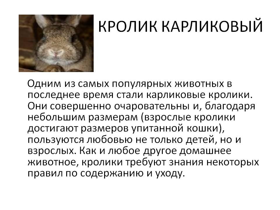 Сколько лет живут декоративные кролики, вислоухие и карликовые и как увеличить этот срок? selo.guru