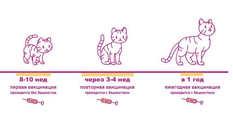 Прививки кошкам. все что нужно знать о вакцинации