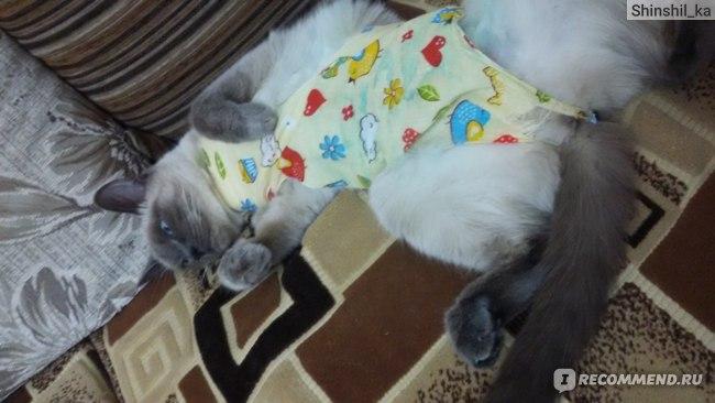 Стерилизация кошки: сколько дней нужно носить попону после операции