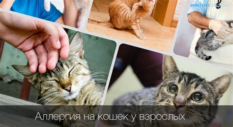 Как избавиться от аллергии на кошек: причины и симптомы