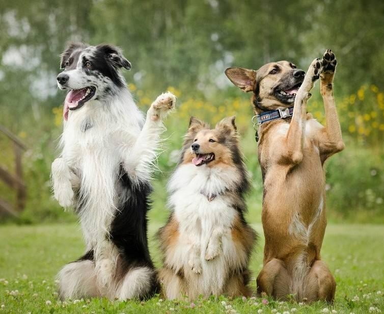 Что делать если у вас непослушная собака