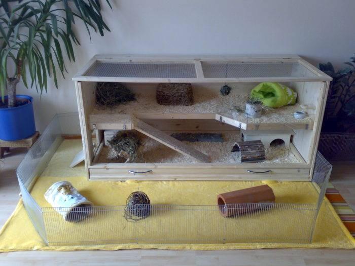Клетка для морской свинки: как обустроить и оборудовать, размеры жилища, как выбрать домик в зоомагазине, фото