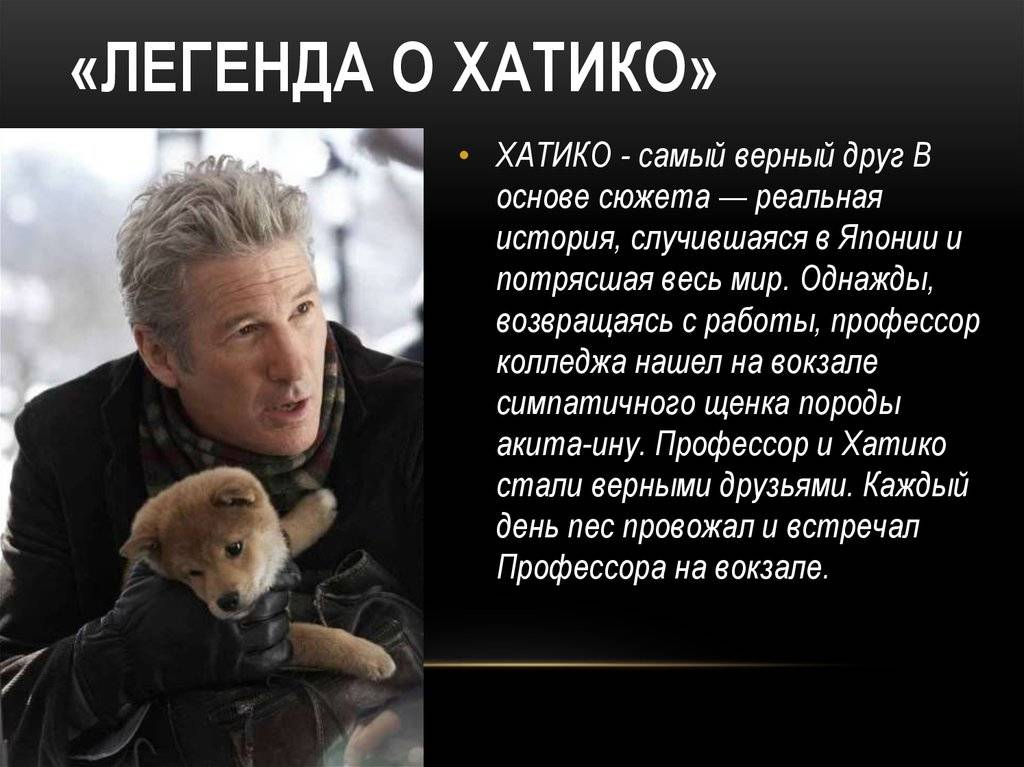 Акита - порода собаки из фильма хатико   сайт о домашних животных