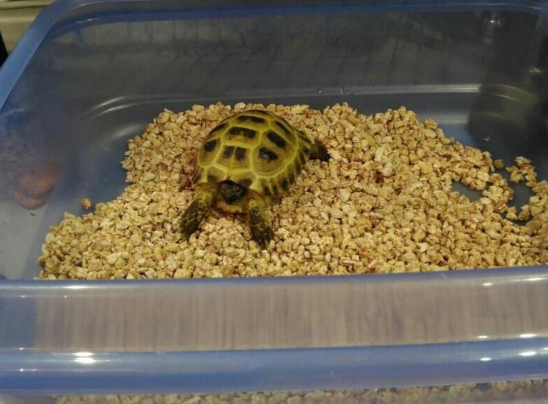 Рацион питания сухопутных черепах — чем можно и нельзя кормить
