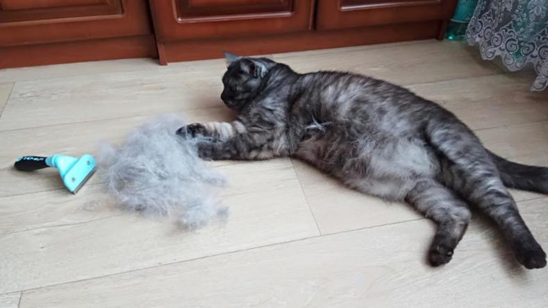 Кошка очень сильно линяет: что надо делать, причины у домашних,
