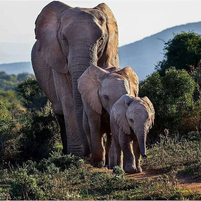 Интересные факты о слонах • всезнаешь.ру