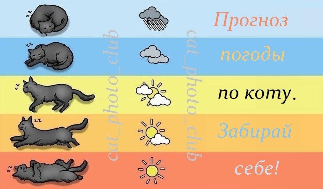 Как животные предсказывают погоду