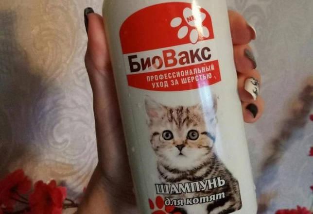 Как приучить котенка к лотку? быстрые способы приучения ходить в туалет маленького котенка. возможные трудности