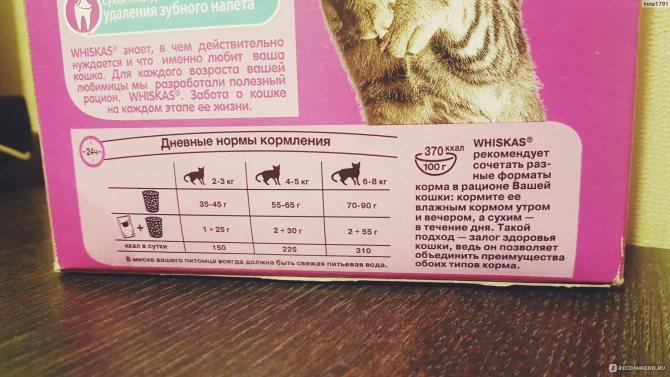 Можно ли кормить кошку одновременно сухим и влажным кормом, как их правильно совмещать и чередовать?