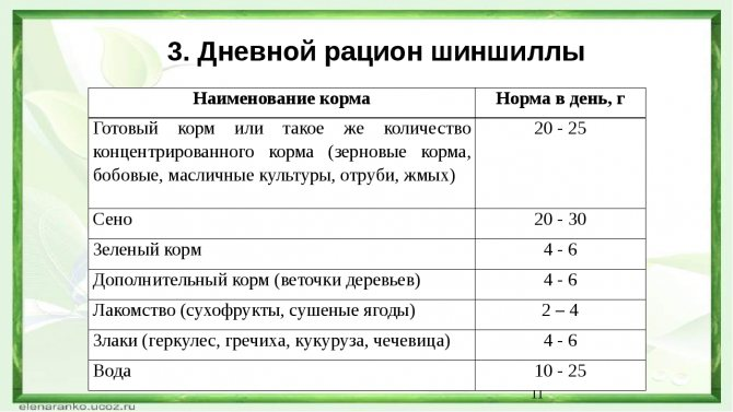 ᐉ что едят шиншиллы - режим дня и питания, прикорм - zooon.ru
