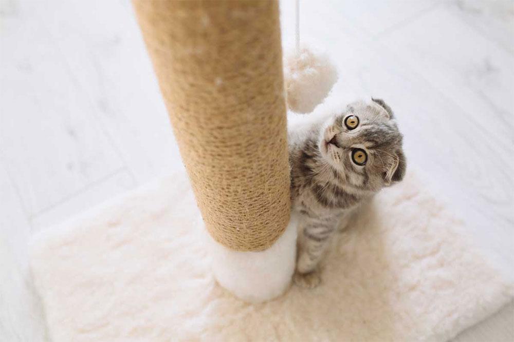 Игрушки для кошек: пошаговая фото инструкция, как сделать из подручных материалов игрушку для кошки своими руками