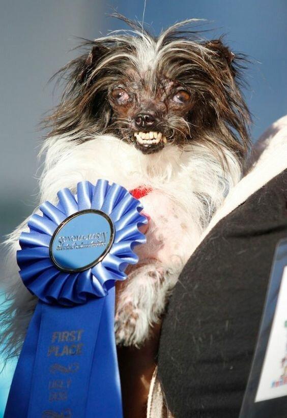Альтернативно-одаренные породы собак: рейтинг самых глупых пёсиков