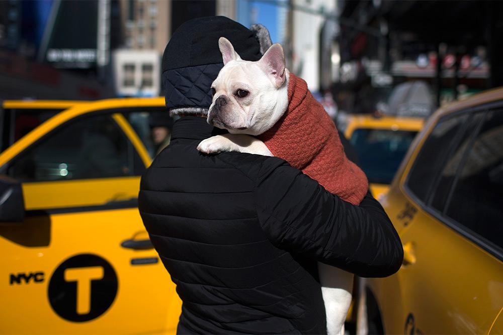 Самая неприхотливая собака для квартиры — маленькие, средние и большие породы