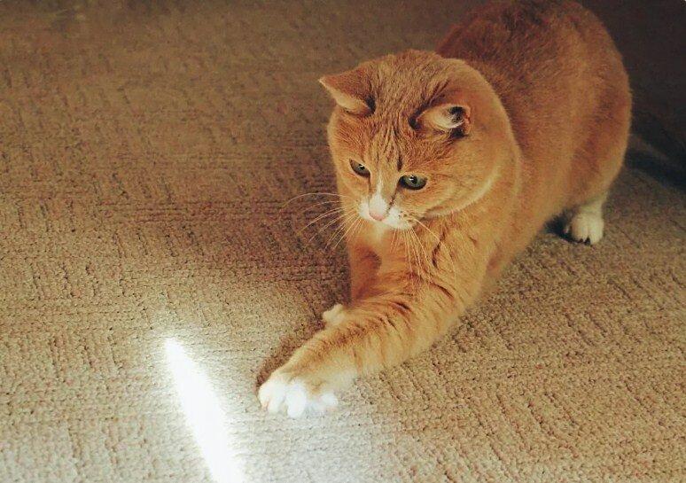 Почему кот трет о вас мордой?