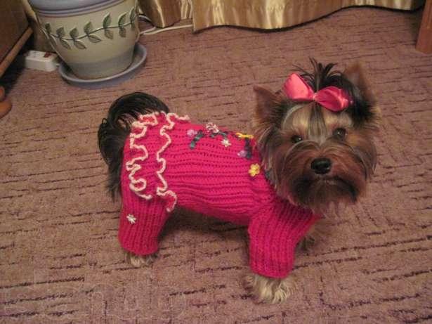 Вязание одежды для собак схема. схемы вязания для маленьких собак. как связать собаке свитер для начинающих спицами. вязание для собак схемы описание, комбинезон, костюм, шапка, спицами, крючком. схем