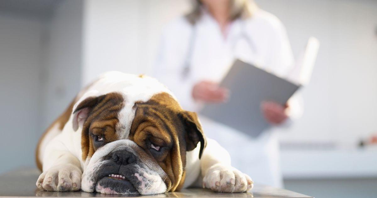 Лечение животных, как уберечь своего питомца от простуды – советы ветеринара