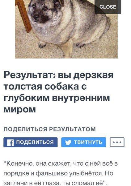 Самая большая собака в мире: топ 10 пород с фото самая большая собака в мире: топ 10 пород с фото