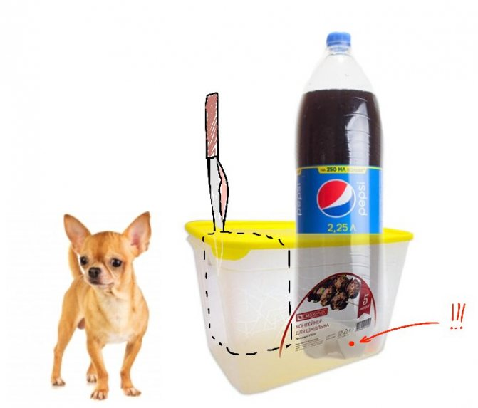 Вольеры для собак — классификация и разновидности, выбор места