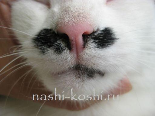 5 причин, почему у кошки холодный и мокрый нос. это проблема?