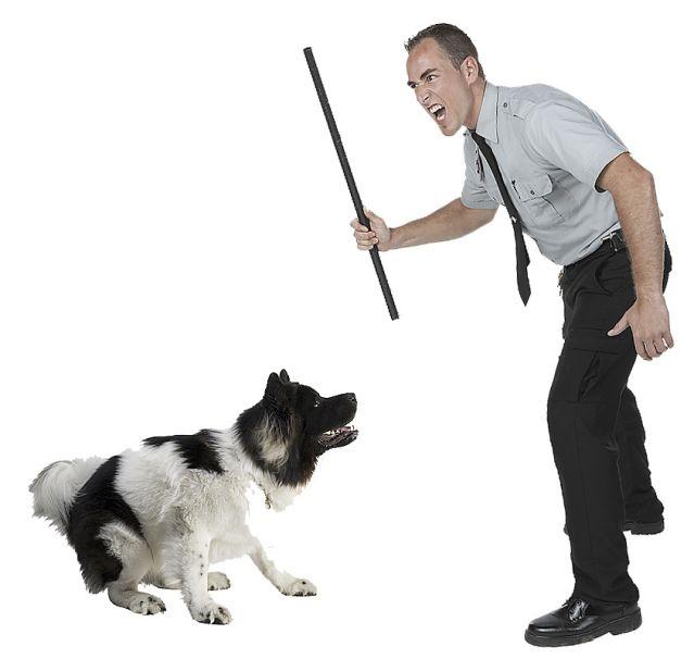 Как правильно наказывать собаку за лужу дома