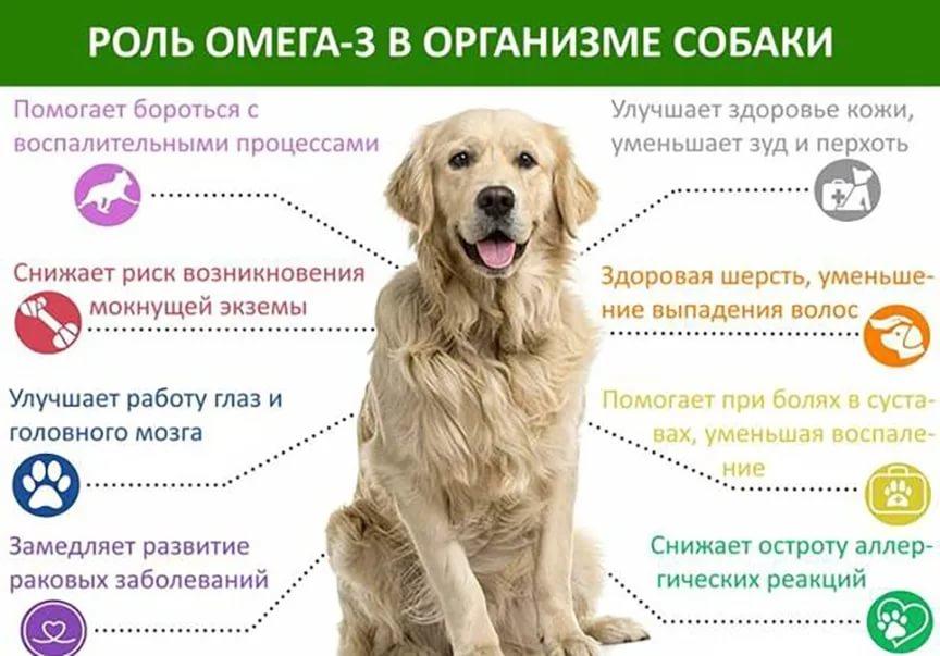 Как похудеть собаке: основные причины ожирения, как снизить вес питомца