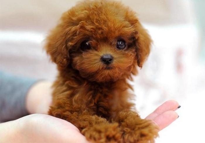 Самые неприхотливые породы собак: какие домашние питомцы (маленькие, средние и большие) просты в уходе и содержании для квартиры и детей, для частного дома?