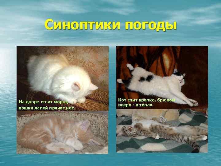 Влияние погоды на домашних животных