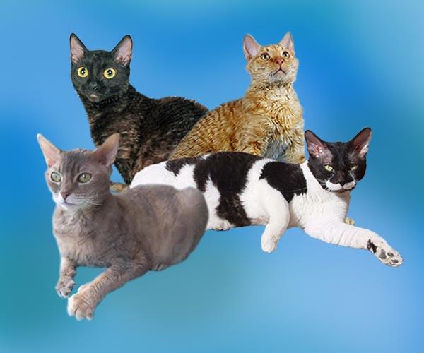 Топ-19 гипоаллергенных пород кошек