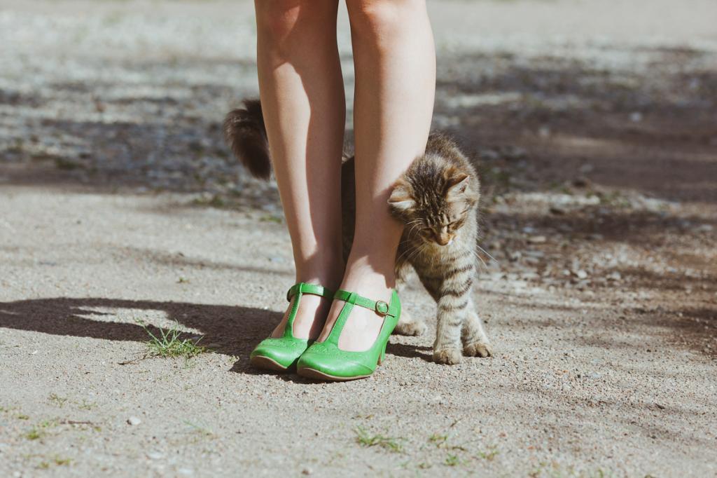 Любят ли кошки своих хозяев? как понять, что кошка тебя любит?