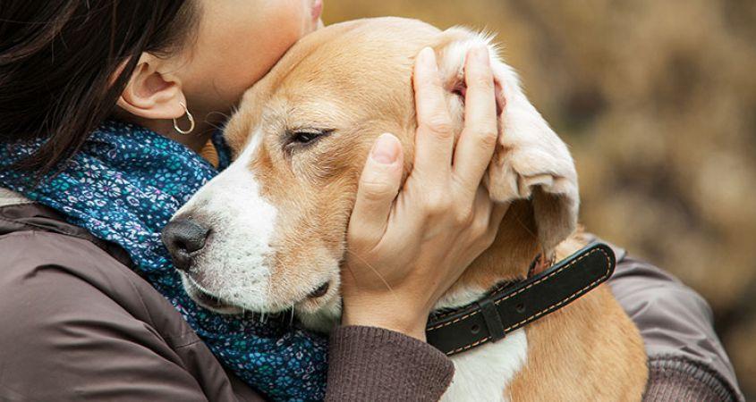 Все породы собак. как выбрать, понять, воспитать