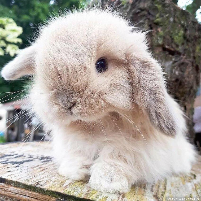 Американский кролик: породы, фото, интересные факты