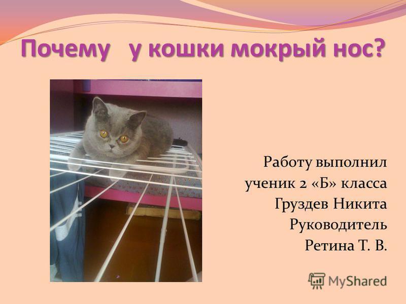 Помощь коту при удушье. что делать, если питомец задыхается