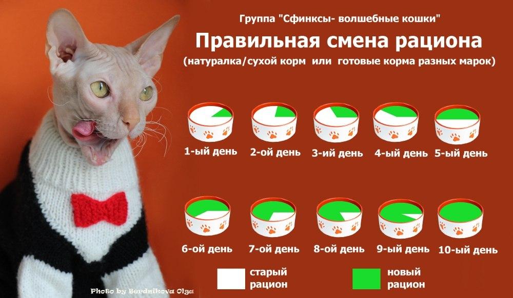 Правила и советы о том, сколько раз в день кормить кошку