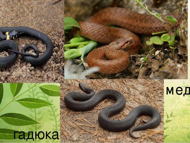 Какие виды змей обитают в наших лесах и что делать, если вас укусила змея - огород, сад, балкон - медиаплатформа миртесен