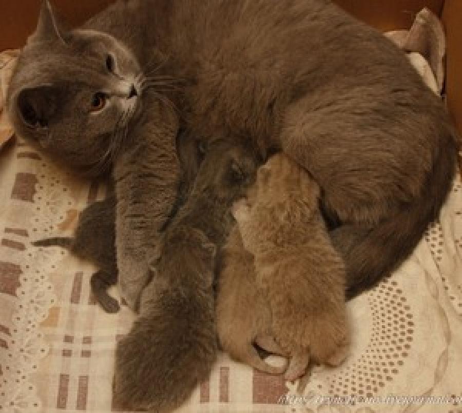 Когда у котят открываются глаза, сколько от рождения должно пройти? где норма и где патология: видит ли новорождённый котёнок, открыв глазки - автор екатерина данилова - журнал женское мнение