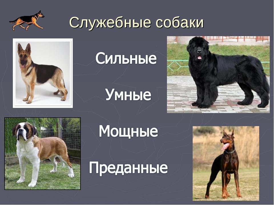 Все про служебные породы собак