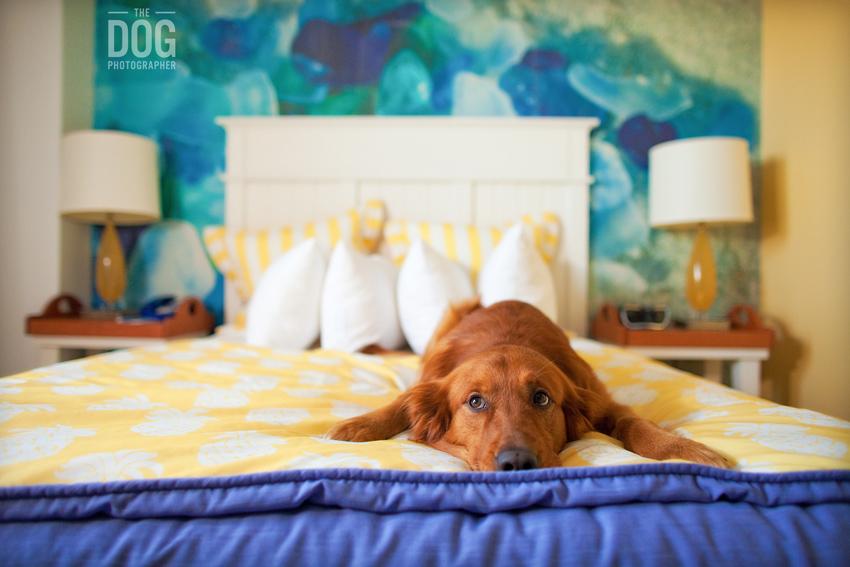 Как отучить собаку спать на кровати с хозяином: самые простые способы