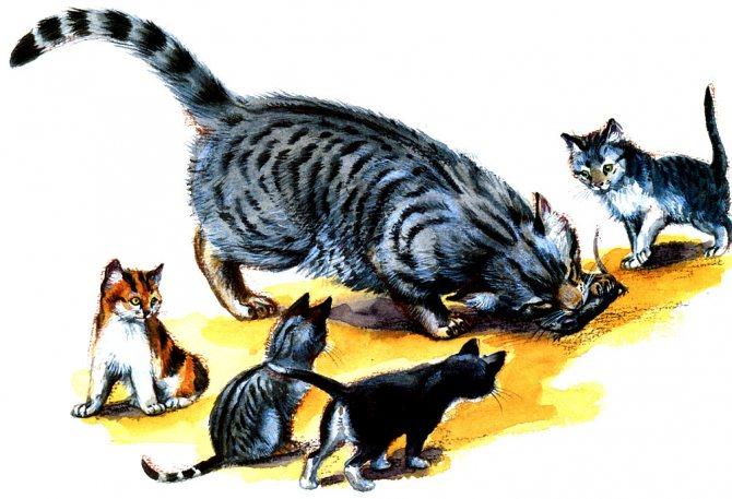 Какие кошки лучше ловят мышей и крыс? лучшие породы.