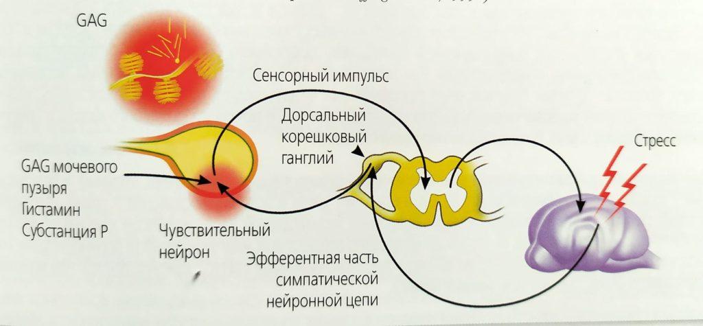 Летальные инфекции кошек: какие и их признаки