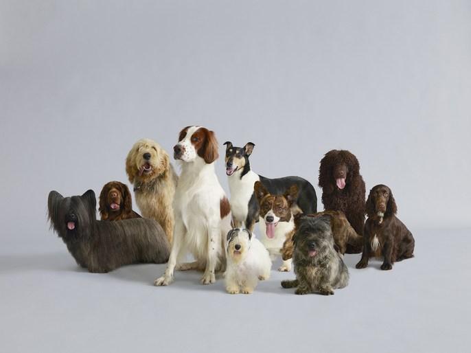 Породы собак для новичков: как выбрать первого лучшего питомца для неопытных владельцев в квартире - самые послушные и легко обучаемые