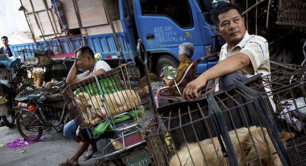 В каких странах едят собак на сегодняшний день: едят ли в южной корее