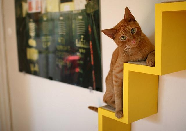 Как отвадить кошек с участка - простые способы