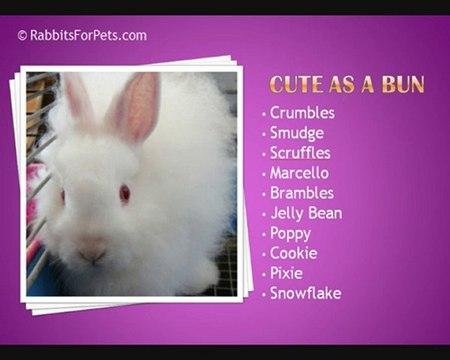 Имена для кроликов мальчиков | «твой кролик»