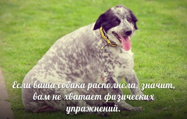 Самые сильные собаки в мире - топ 38 мощных пород (+ фото)